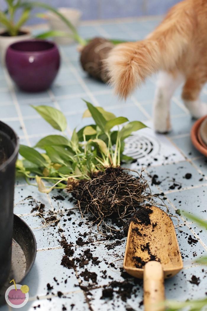 Vihreä uusi alku (mullan vaihto sisäkasveille)